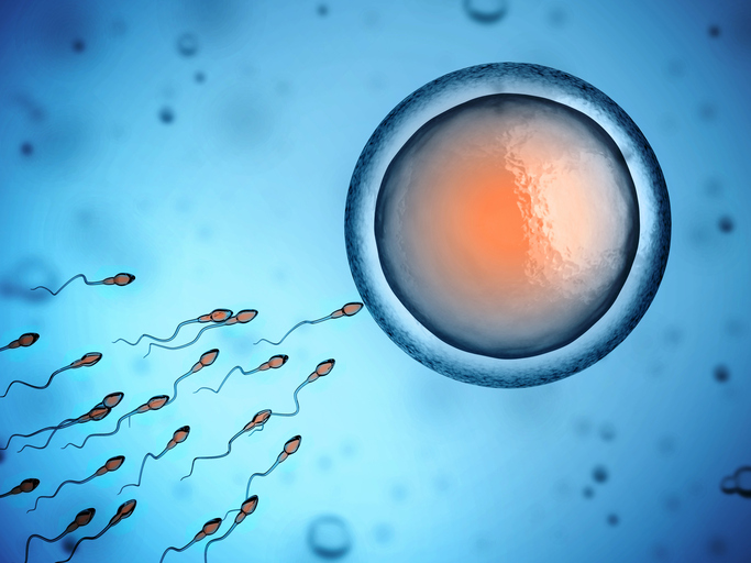 What Does Low Sperm Motility Mean?