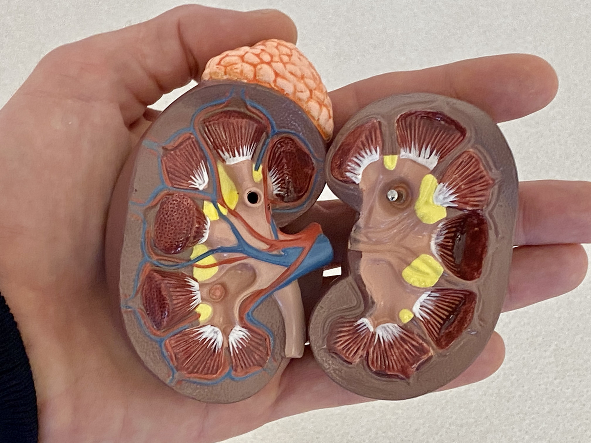 Top Urologist's Guide for Kidney Transplant Patients
